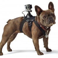Strap a GoPro to your dog for a whole new perspective
