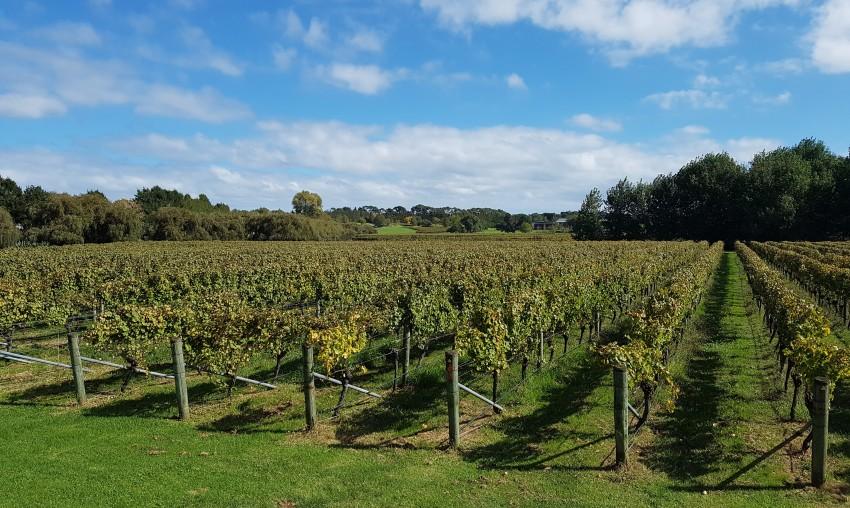 Villa Maria Winery